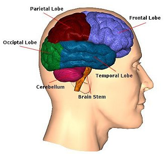 Image result for acute head injury